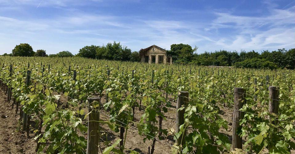 Vignes à Saint-Emilion, Bordeaux